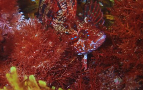 Seizing ocean photography