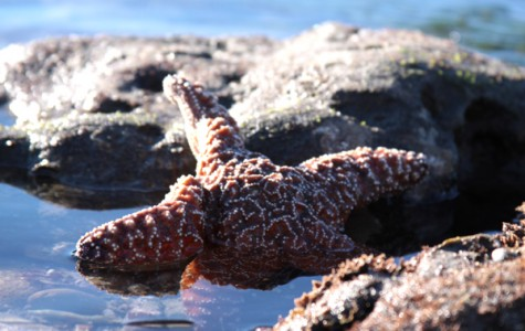 Sea stars were seen everywhere with the tide being so low.
