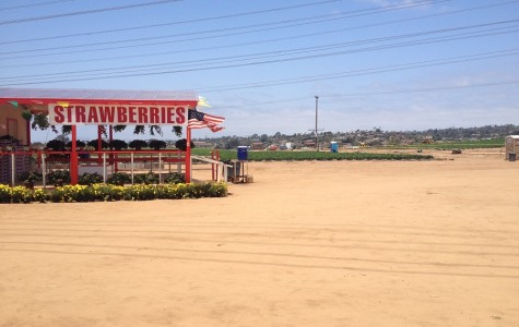 The Strawberry field is a long time place in Carlsbad that is being renovated to become a mall.