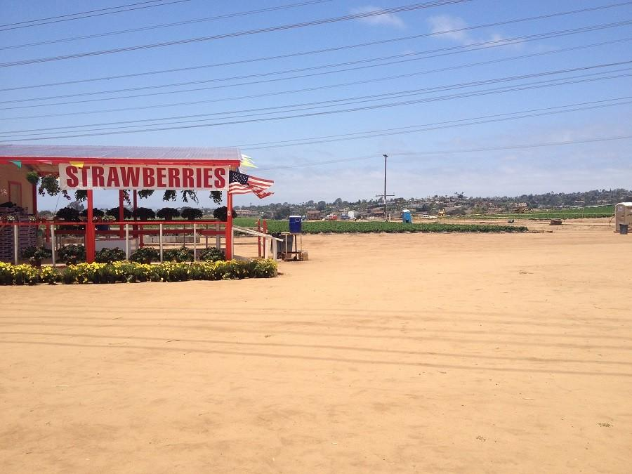 The+Strawberry+field+is+a+long+time+place+in+Carlsbad+that+is+being+renovated+to+become+a+mall.