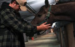 Senior Josh Bryant pets an evacuated horse, making sure he is safe and calm. The Del Mar Fairgrounds is opened for horses and other animals in need of a temporary home.