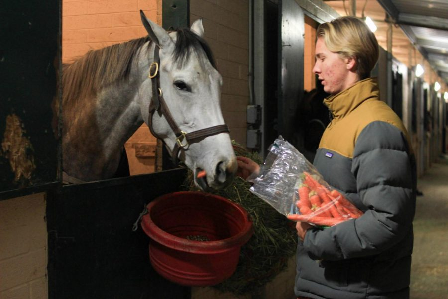 Senior Dailey Sparks feeds a horse carrots, Friday, Dec. 8. Sparks helped out at the Del Mar Fairgrounds horse evacuation.