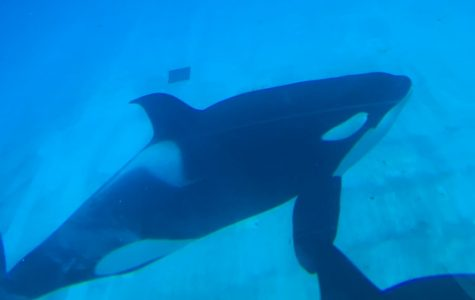 Sea World San Diego helps local tourism