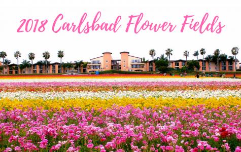 The Flower Fields open for the 2018 season