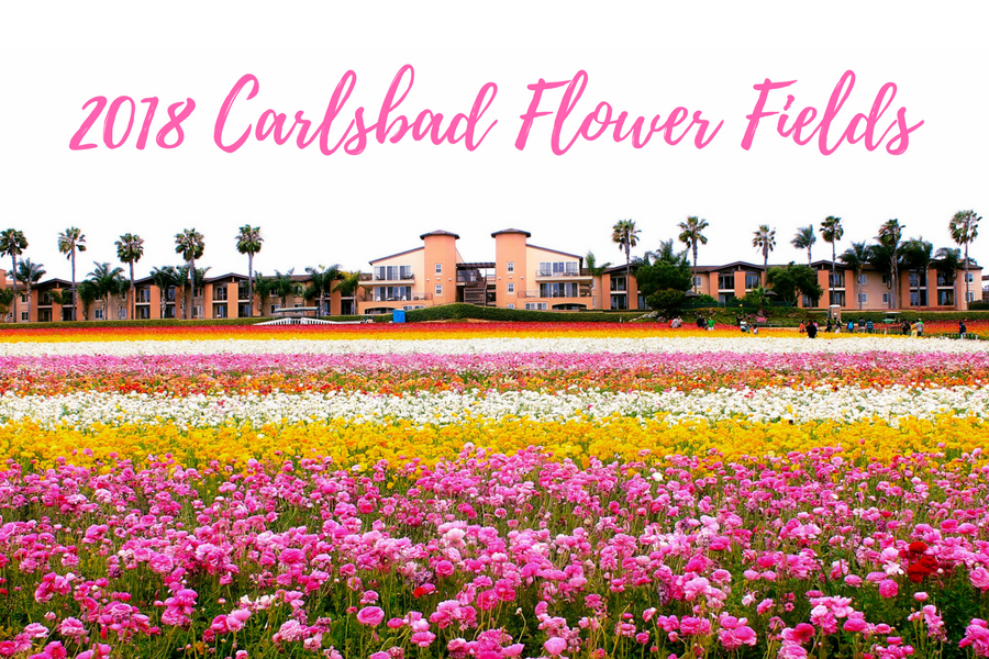 The Flower Fields open for the 2018 season