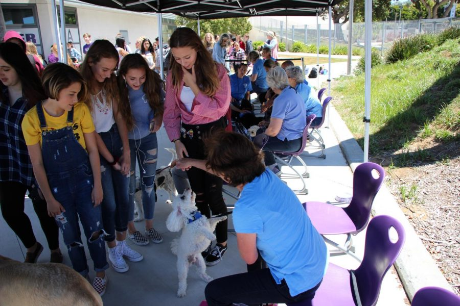 Freshman gather around Daisy the dog as she performs her trick of standing on her hind legs.