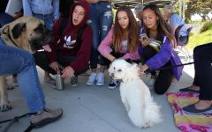Gracie the dog sits down after performing tricks for the students, such as standing on her hind legs.