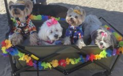 Dogs, Izzy, Layla, Skittle, Bitsy, watch as their fellow furry friends compete in the surf competition.