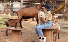 Annabelle Chambers spends her free time at Sugar Sweet Farms bonding with the farm animals.